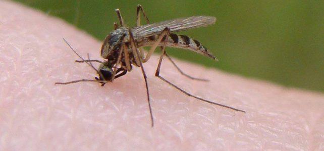 Vlekken van doodgeslagen muggen verwijderen